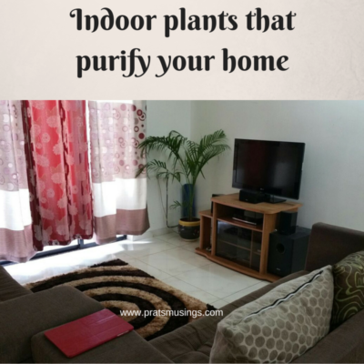 Indoor plants that purify your home