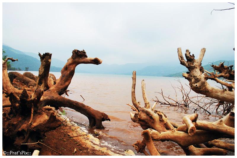 Driftwood at Mulshi Dam